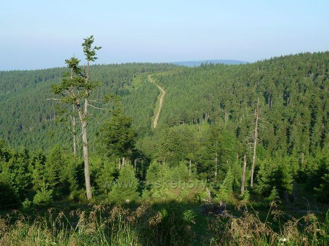 Pohled z cesty na Vřesovou studánku na okolní svahy Jeseníků