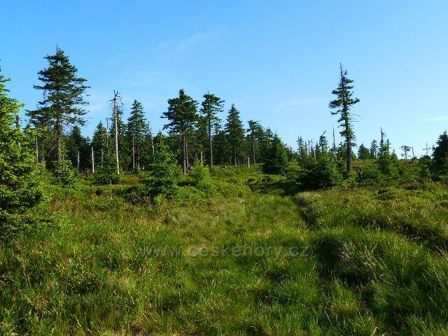 Lesní porost lemující cestu k Vřesové studánce