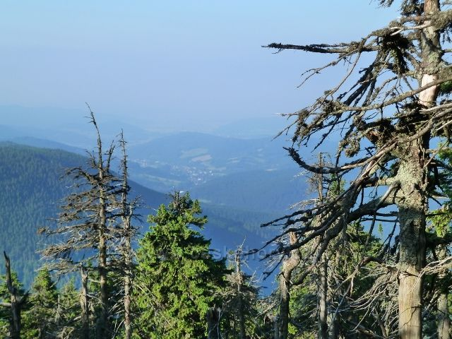 Výhled z cesty k Vřesové studánce směrem  k obci Loučná nad Desnou