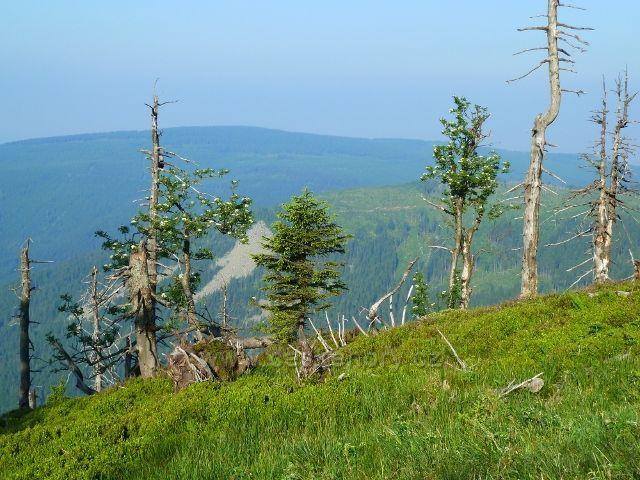 Pohled na suťové svahy Klínové hory z cesty na Vřesovou studánku