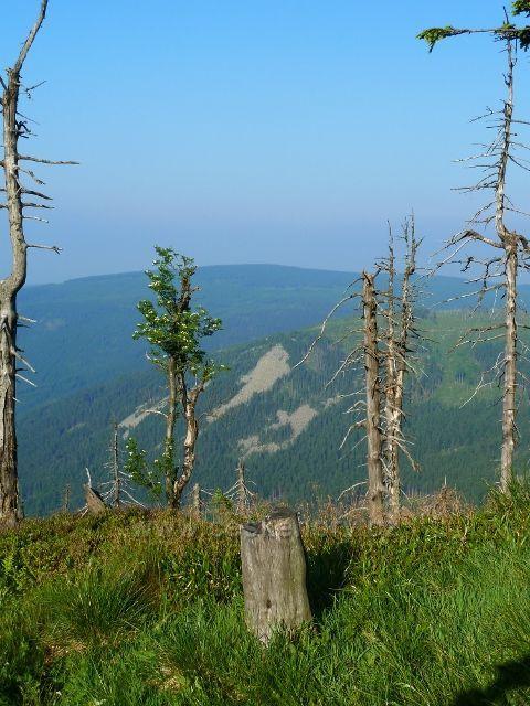 Pohled z cesty na Vřesovou studánku na protější svah Klínové hory