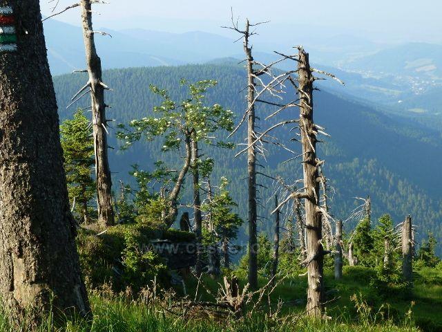 Lesní partie na úbočí Červené hory