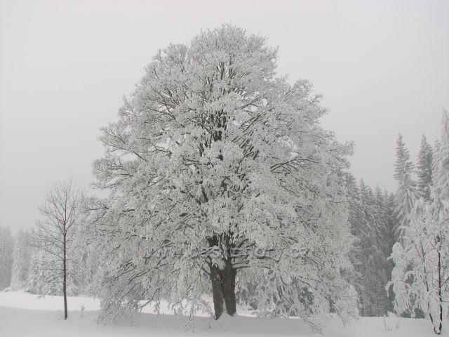 Strom u cesty