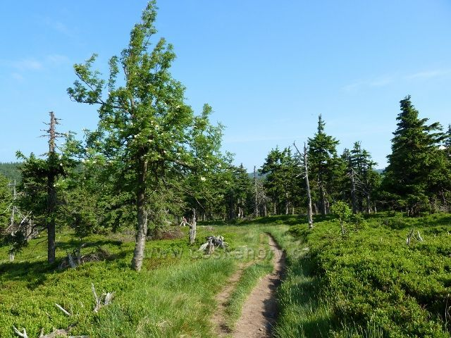 """Lesní porost v sedle """"Pod Vřesovkou"""""""
