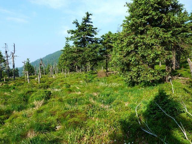 Jedno z rašeliništ kolem cesty k Trojmezí
