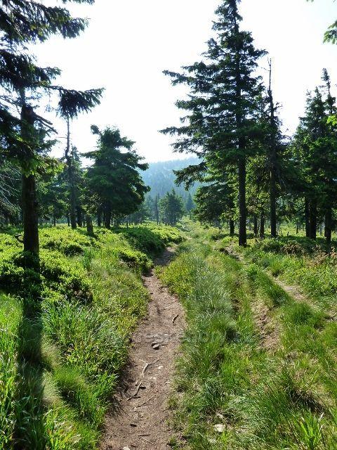 Cesta k Trojmezí začíná mírně stoupat