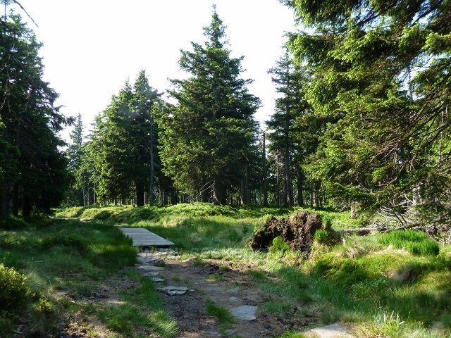 O tom,že cesta na Trojmezí prochází mokřady, svědčí vedle dřevěných chodníků i časté vývraty stromů