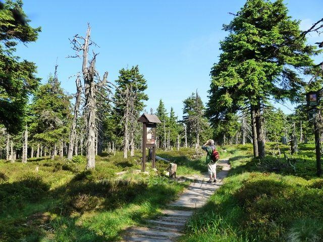 """Informační tabule v """"pralese knížete Lichtensteina"""", jímž prochází tato cesta k Trojmezí"""