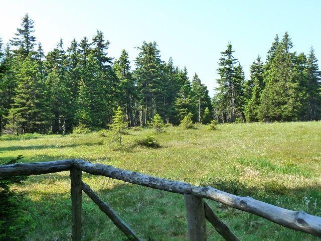 Pohled na rašeliniště z vyhlídkového ochozu u cesty k Trojmezí