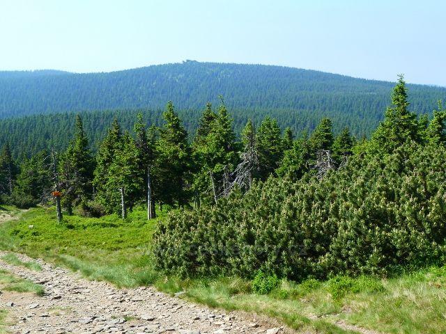 Pohled na Vozku z cesty na úbočí Keprníku