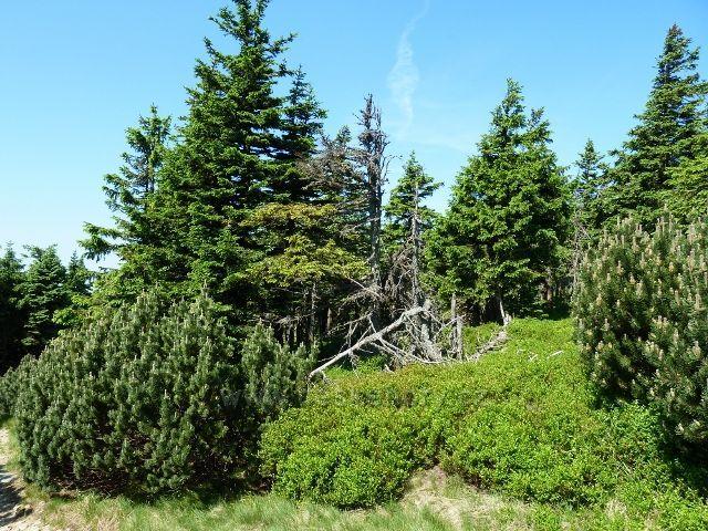 Lesní porost okolo  rozcestí Šerák