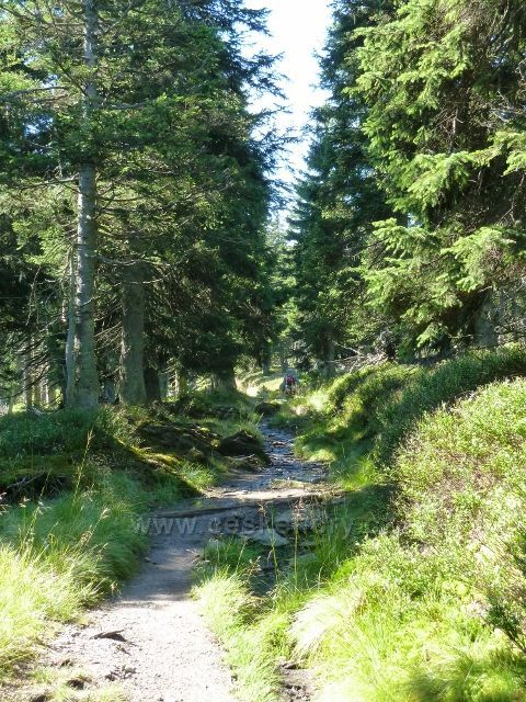 Cesta na Vozku po žluté TZ připomíná místy koryto potoka
