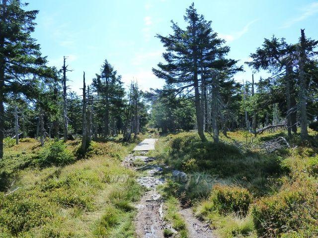 Stezka před vrcholem Vozky prochází rašeliništěm