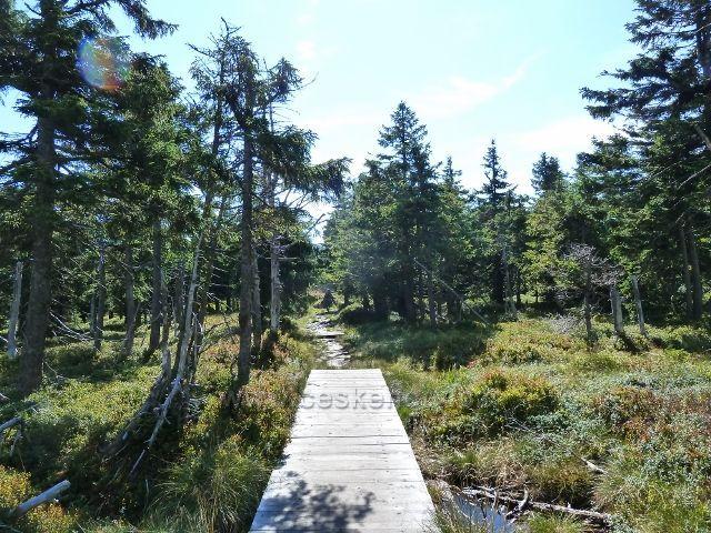 Chodník rašeliništěm před vrcholem Vozky
