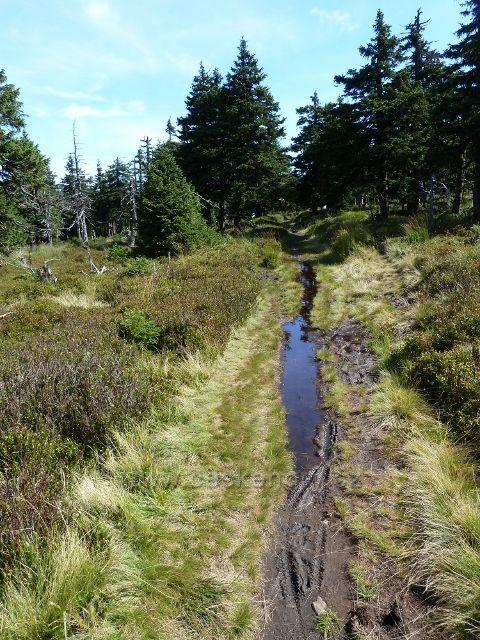 Sestupová stezka z Vozky po zelené TZ