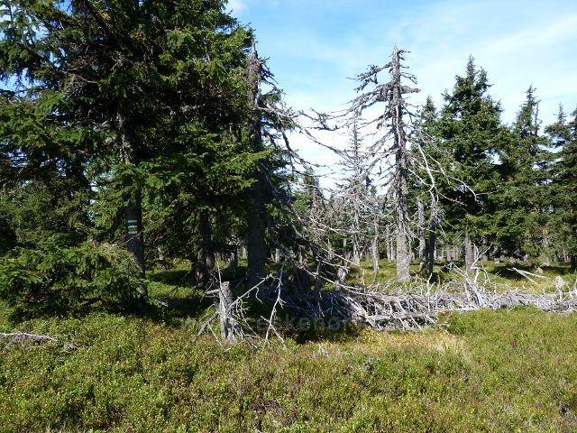 Lesní partie na úbočí Vozky