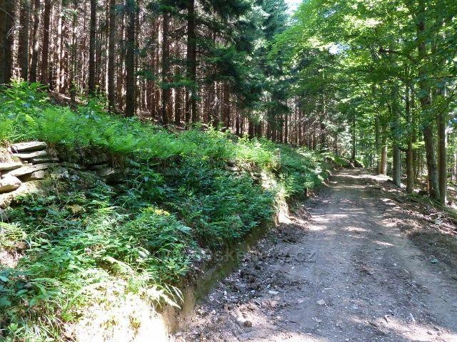 Tudy vedla lesní železnice do Aloisova