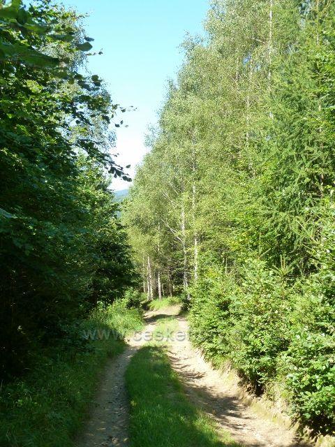 Sestupová cesta po zelené TZ k hájovně Banjaluka