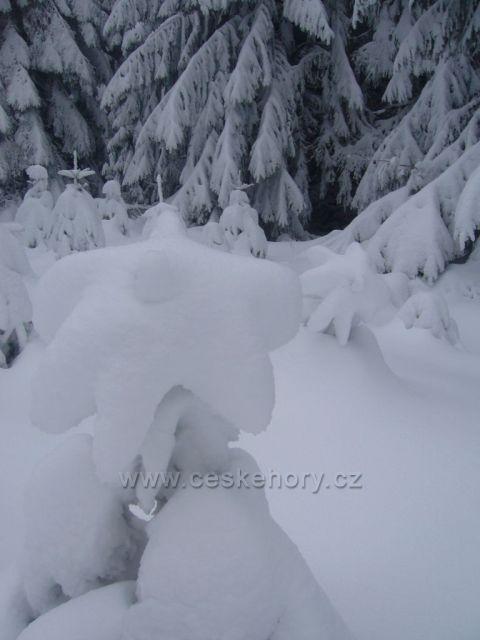 Krušné Hory - Klíny - Sněhový květ