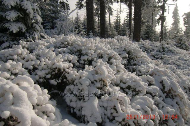 Sněhové polštářky cestou na Klínovec