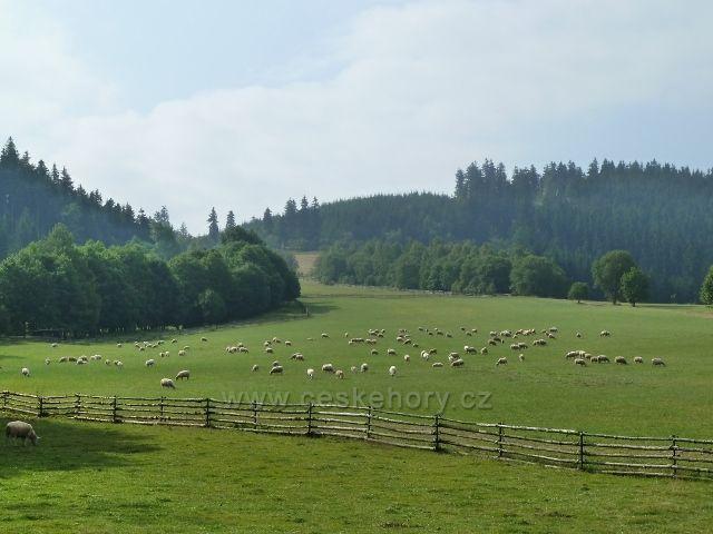 Pastviny pod Křížovou horou