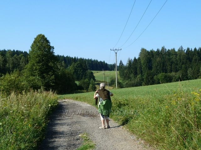 Cesta po zelené TZ z Ostružné do Branné
