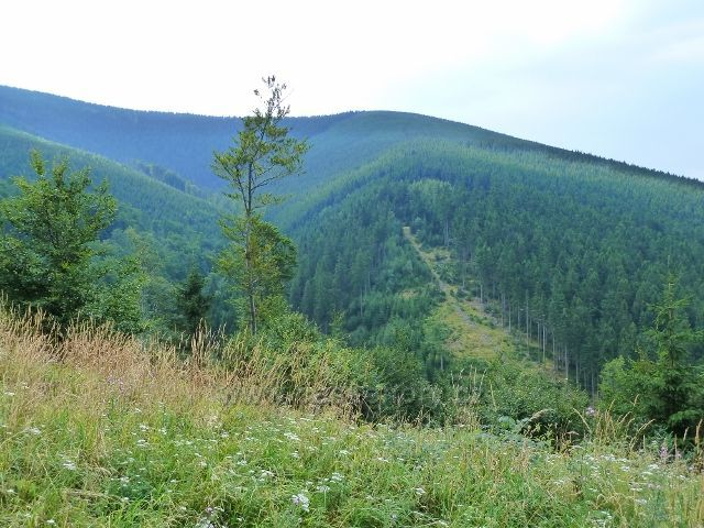 Úbočí Šeráku a horní část údolí Vražedného potoka