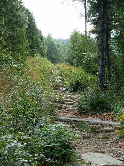 Stále stoupající chodník po zelené TZ k Obřím skalám