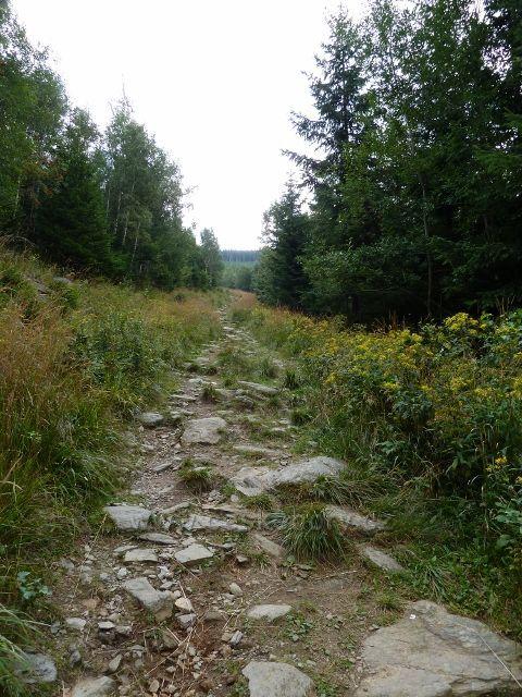 Chodník po zelené TZ k Obřím skalám je ve své první polovině značně kamenitý