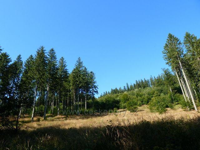 Lesní porost v okolí cyklostezky z Javoříku k Obřím skalám