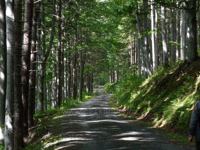 Cyklostezka 6208 z Obřích skal do Lázní Lipová vede ve své spodní části bukovým lesem