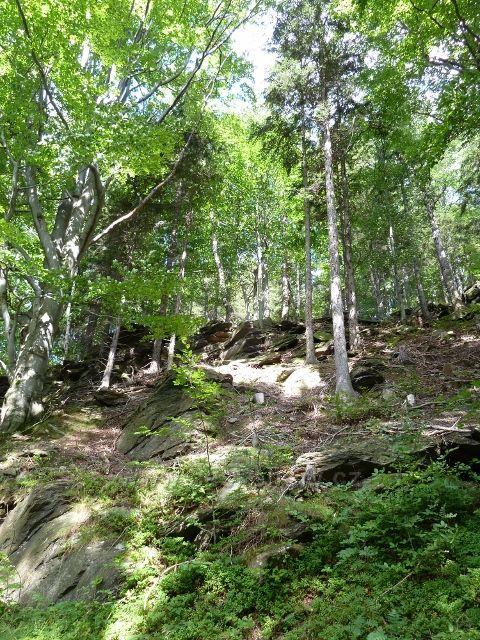 Skalnatý terén v okolí dolní části cyklostezky 6208 z Obřích skal do Lázní Lipová