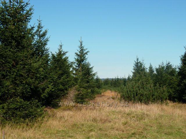 Lesní porost kolem Kunštátské kaple