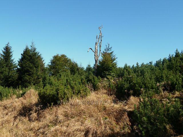 Lesní porost v sedle pod Tetřevcem