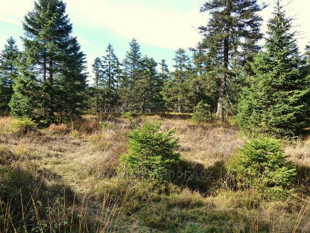 Lesní porost na Velké Deštné