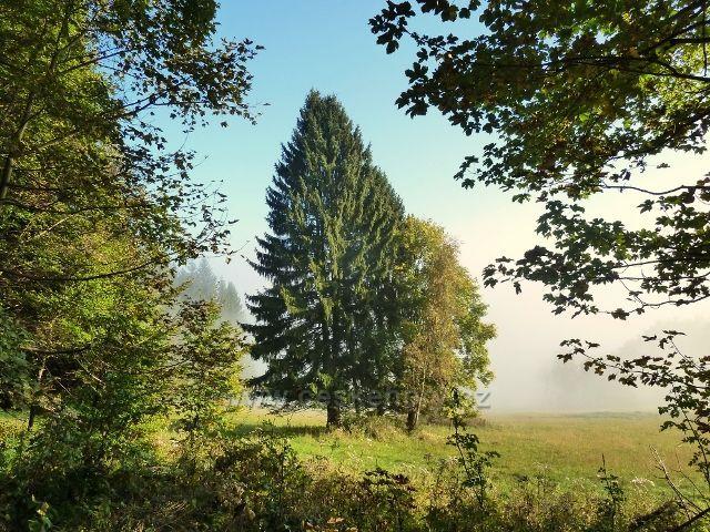 Horní Lipová - ranní mlha nad vrstevnicovou cestu nad Lesní bar