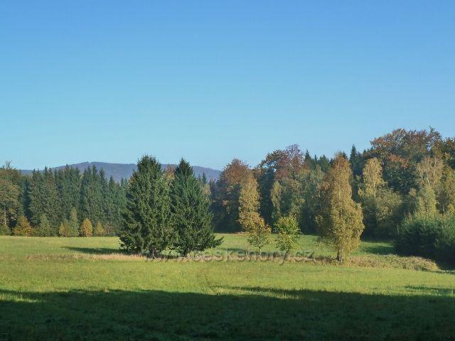 Horní Lipová - pastvina pod vrstevnicovou cestou nad Lesní bar