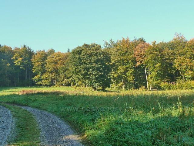 Horní Lipová - Lesní louka nad vrstevnicovou cestou  k zákrutě nad Lesní bar