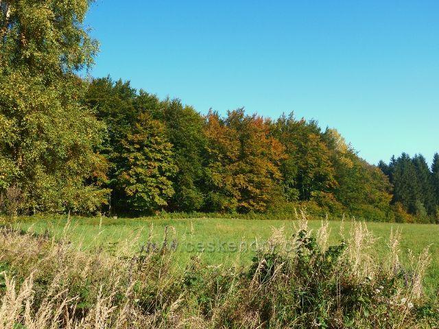 Horní Lipová - stěna lesa pod vrstevnicovou cestou nad Lesní bar