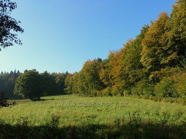 Horní Lipová - stěna lesa nad vrstevnicovou cestou nad Lesní bar