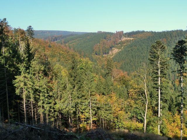 Horní Lipová - pohled z vrstevnicové cesty nad Lesní bar na protilehlý svah údolí Vápenného potoka