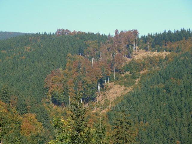 Horní Lipová - zpětný pohled z vrstevnicové cesty nad Lesní bar na přilehlý svah Vápenného potoka