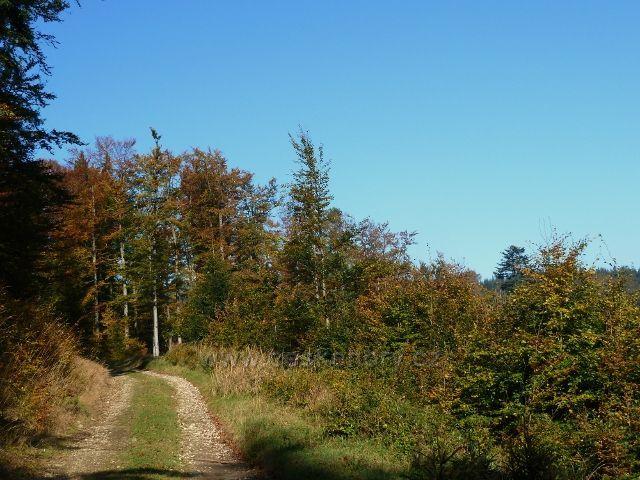 Horní Lipová - poslední část vrstevnicové cesty nad Lesní bar