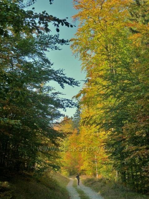 Horní Lipová - poslední část vrstevnicové cesty nad Lesní bar prosvětluje dopolední slunce