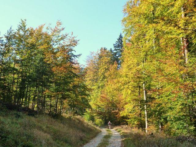 Horní Lipová - poslední úsek vrstevnicové cesty nad Lesní bar ozařuje dopolední slunce