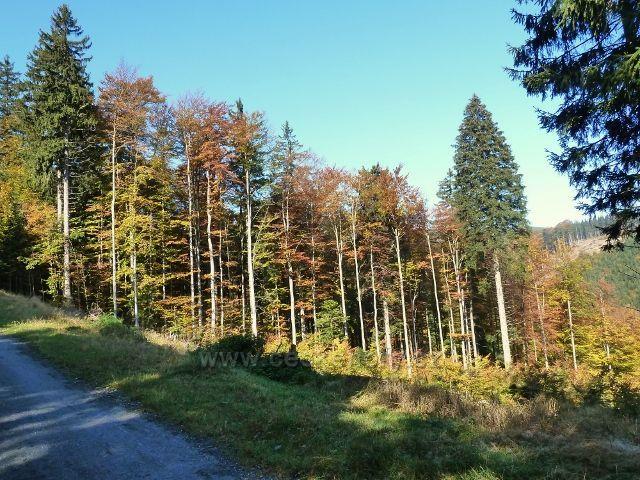 Horní Lipová - stěna vykácené paseky pod cyklostezkou 6044 nad Lesním barem