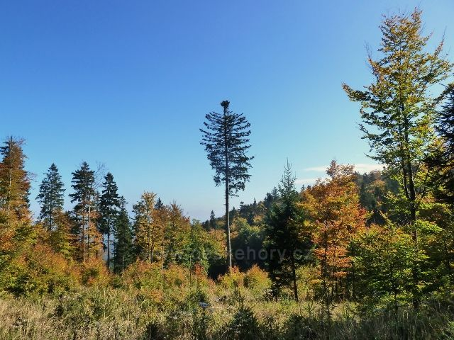 Horní Lipová - lesní porost kolem cyklostezky 6044 před horním lesním barem