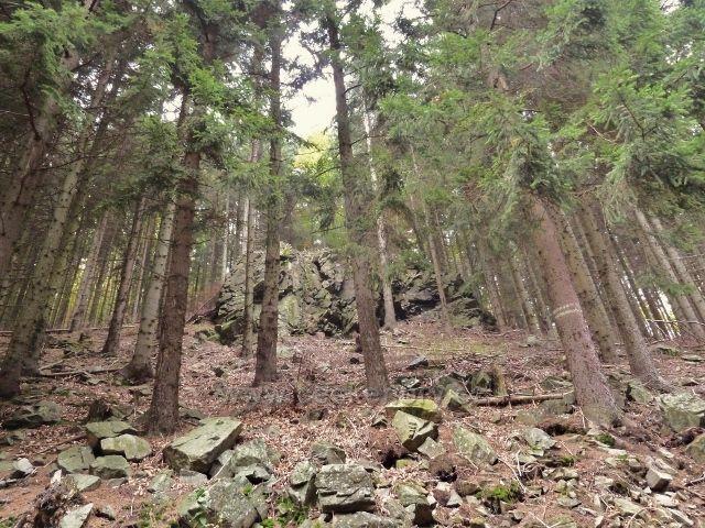 Horní Lipová - skály v lesním porostu nad vrstevnicovou cestou pod Lesním barem