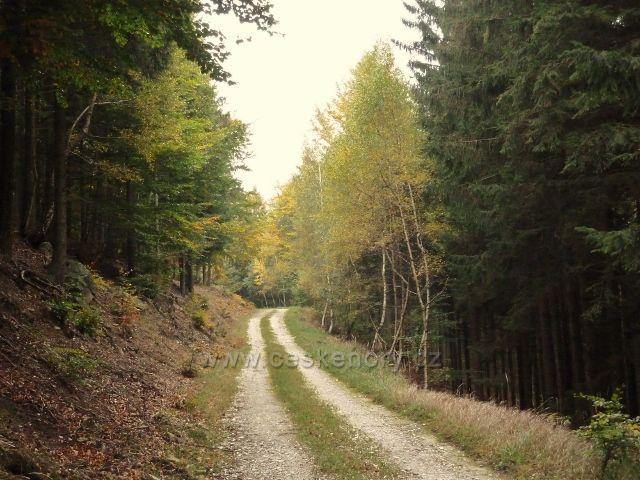 Horní Lipová - zpětný pohled na vrstevnicovou cestu pod Lesním barem