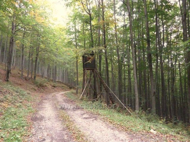 Horní Lipová - posed u vrstevnicové cesty pod Lesním barem